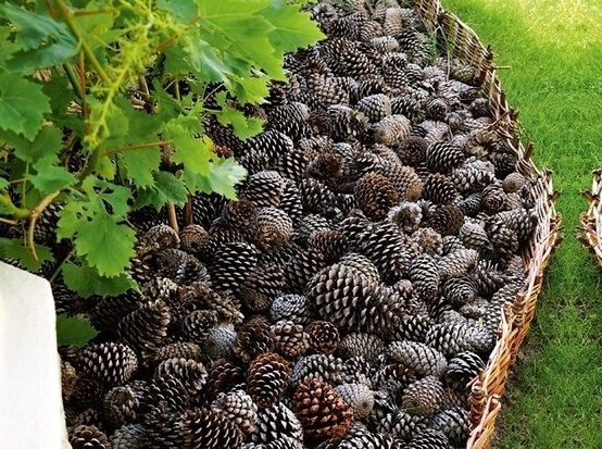 Save your pinecones for bedding, which will keep pups and cats out of your plants.