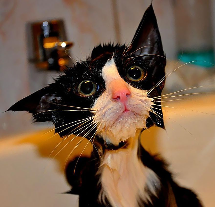 22 Awesomely Funny Pictures Of Wet Cats