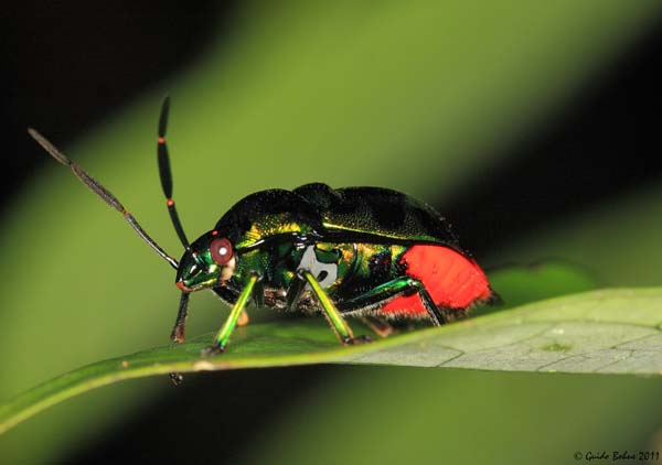 13.) What's the difference between an etymologist and an entomologist?… An etymologist knows the difference.