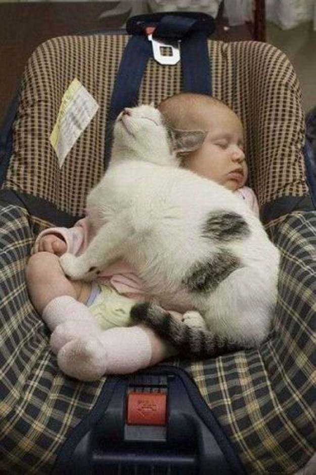 20 Of The Cutest Pictures Of Cats And Babies