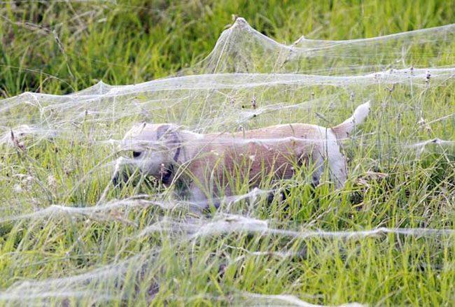 cool-dog-running-field-web