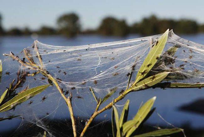 cool-leaves-plants-spider-infestation