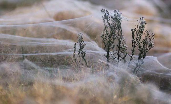cool-snow-like-web-plants
