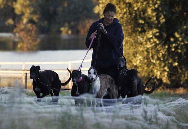 funny-woman-walking-dogs-field-web
