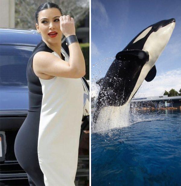 Kim Kardashian and shamu