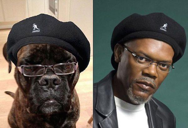 Samuel Jackson and this dog