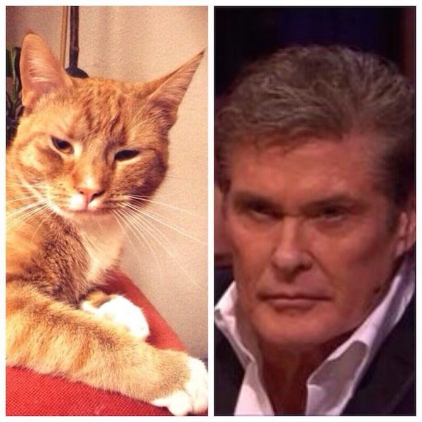 The Hoff and this kitty