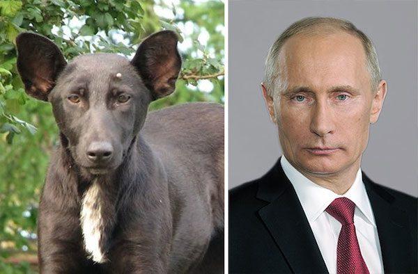This dog and Vladimir Putin