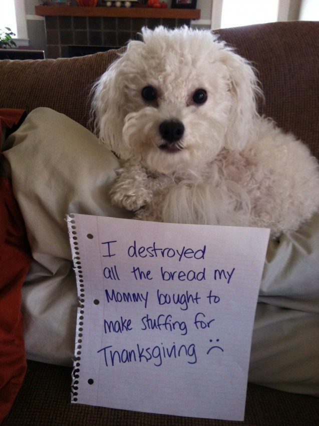 16 Dogs Who Ruined Thanksgiving Dinner