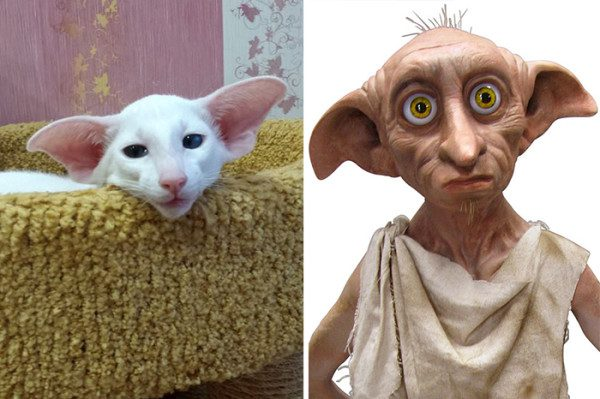 8. Dobbie the Elf from