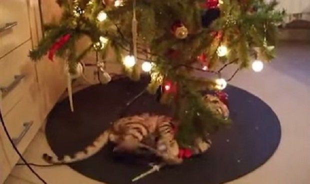 Cats Vs Christmas Trees.The Very Best Of Cats Vs Christmas Trees