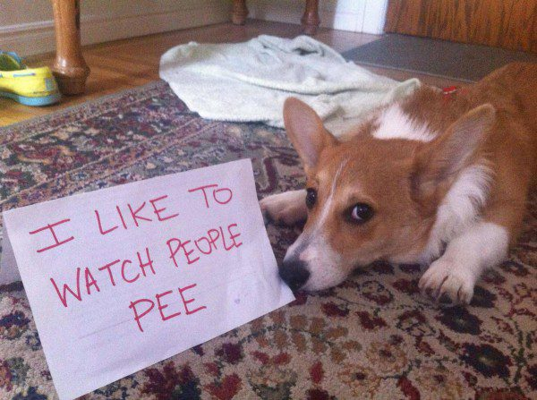 Hilarious Dog Shaming Photos: Corgi Edition