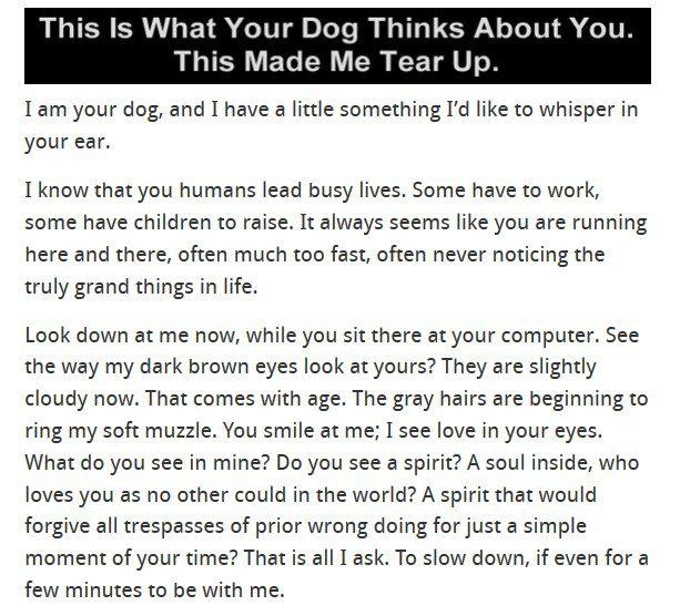 dogthinks