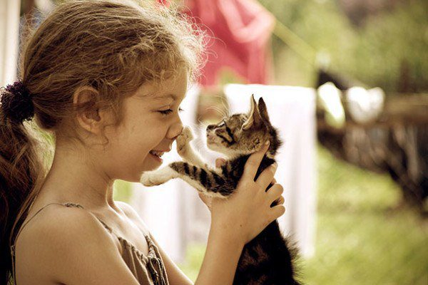 cat cats friends children prove being adorable needs every friendship source 500px
