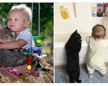 children and cats