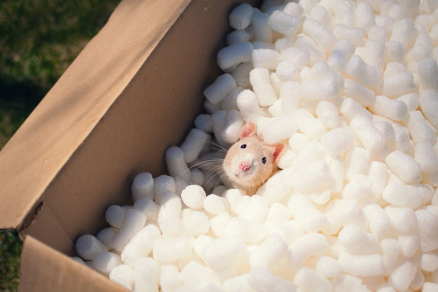 xx-Photos-That-Prove-Rats-Are-The-Cutest-Pets-Ever__880