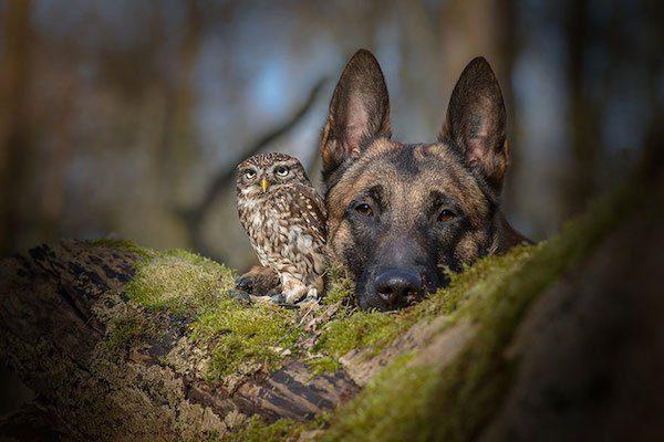 02-dog-and-owl