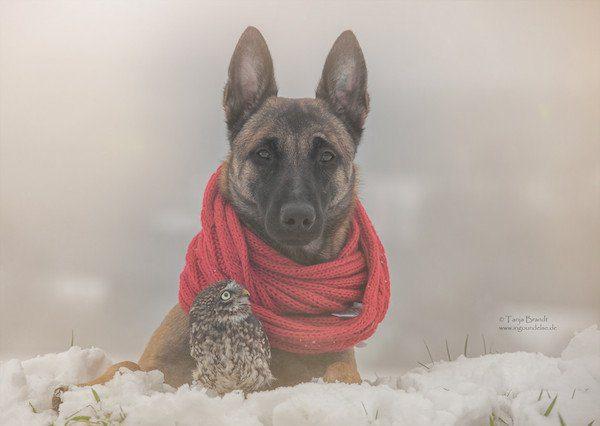 03-dog-and-owl