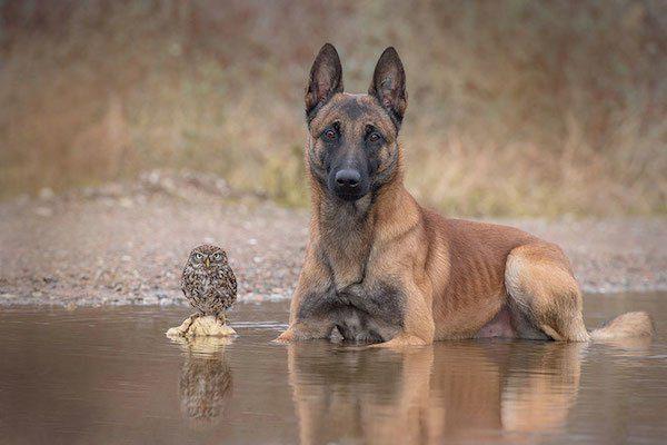 05-dog-and-owl