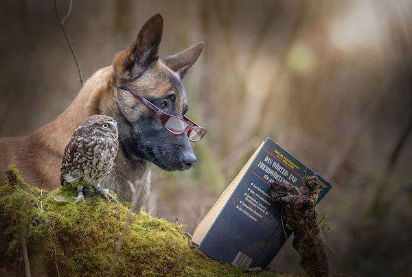 07-dog-and-owl