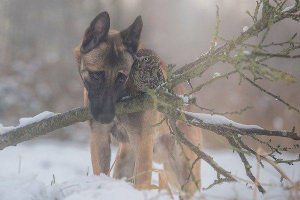 08-dog-and-owl