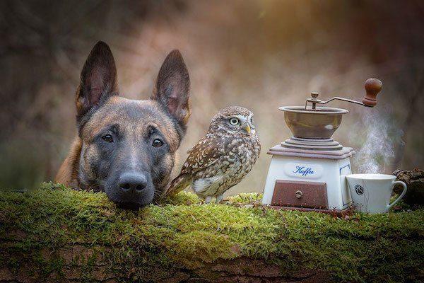 10-dog-and-owl