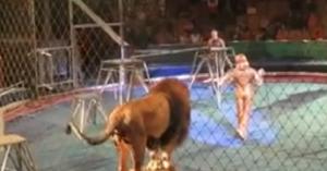 circus lion attack
