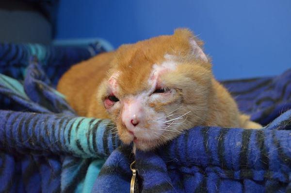 Cat Comforting Sick Human