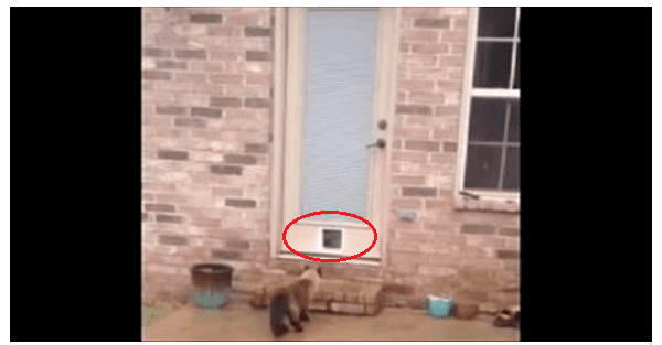 cat door fail & cat door fail - NewsLinQ
