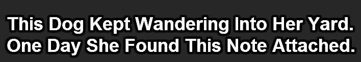 wanderingdog