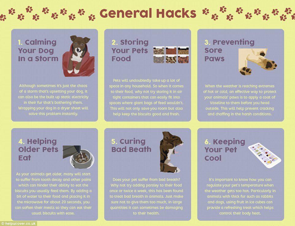 doghacks1