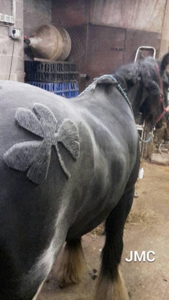 horse hairdo 8