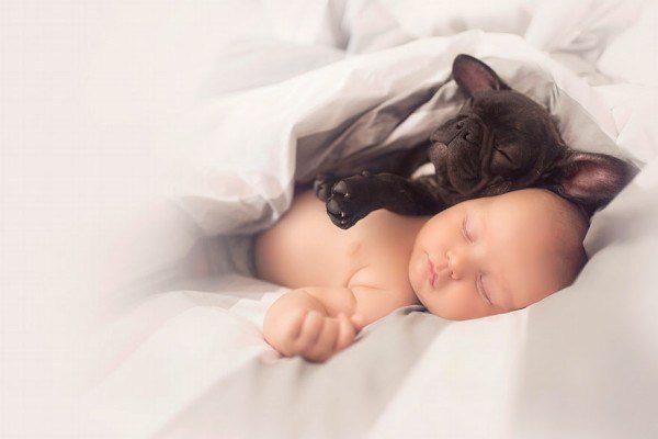 Baby And French Bulldog 1