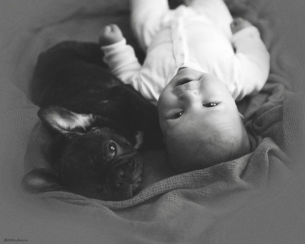 Baby And French Bulldog 4