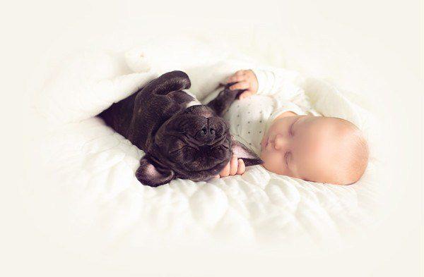Baby And French Bulldog 7