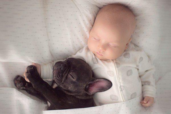 Baby And French Bulldog 8
