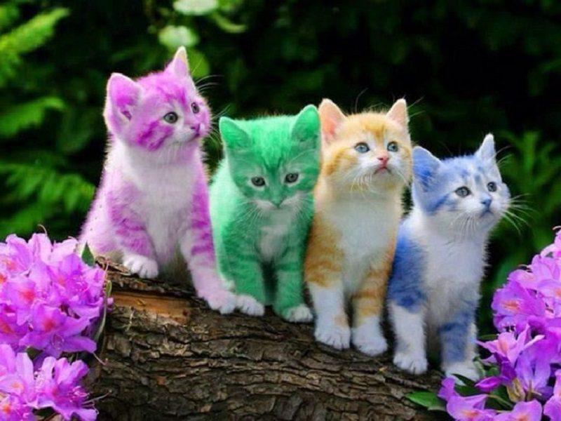 cute cats -4