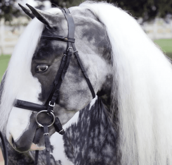 Rare horse breeds - photo#17