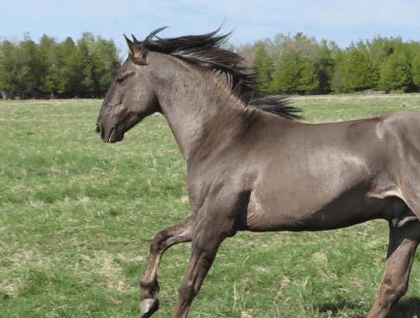 Rare horse breeds - photo#27
