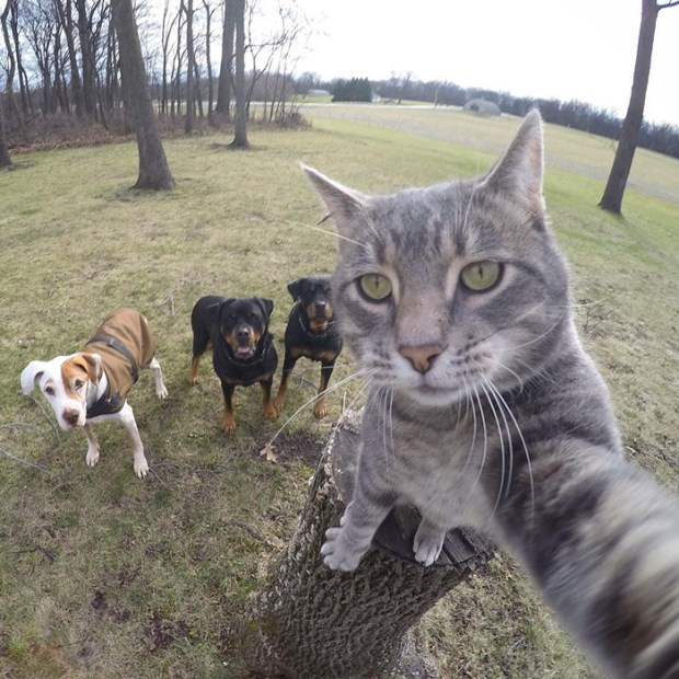 selfie cat 3