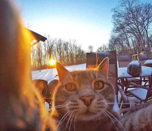selfie cat 4