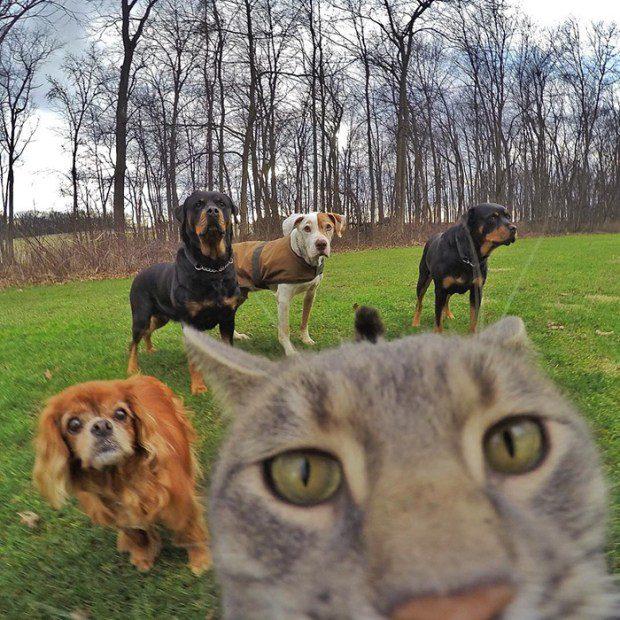 selfie cat 5