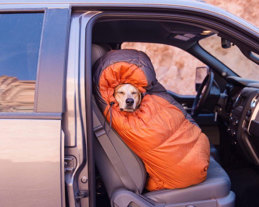 dog adoption travel buddy 1