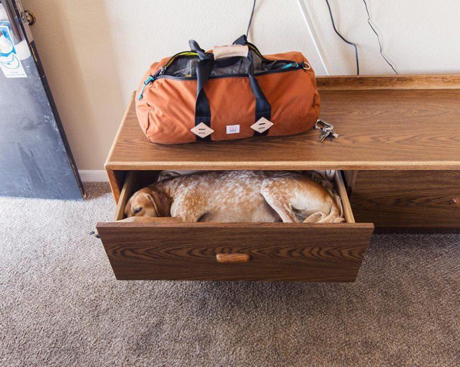 dog adoption travel buddy 10