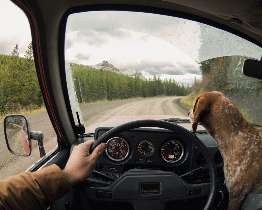 dog adoption travel buddy 11