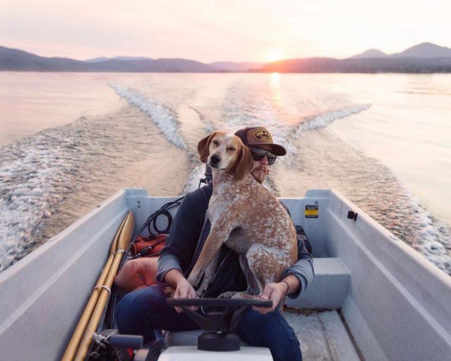 dog adoption travel buddy 14