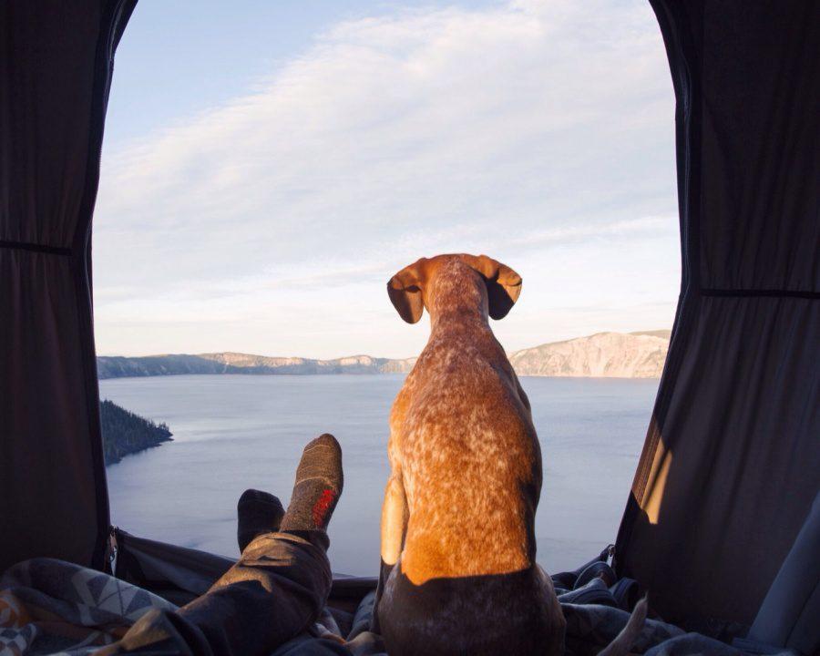 dog adoption travel buddy 19