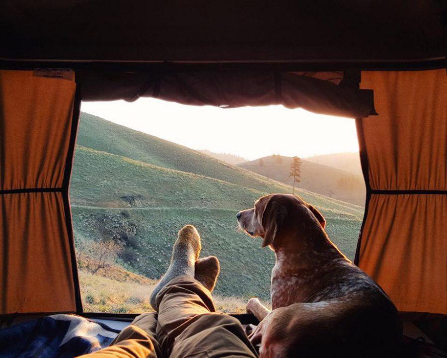dog adoption travel buddy 3