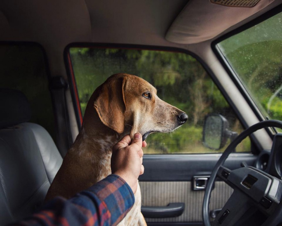 dog adoption travel buddy 4