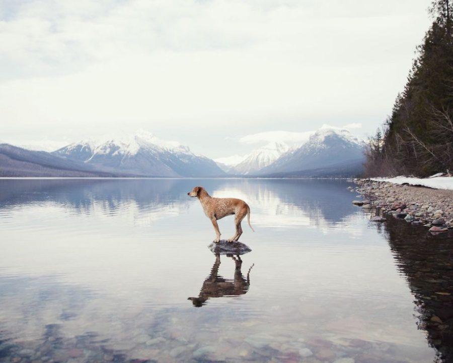 dog adoption travel buddy 7